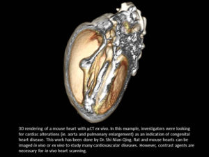 3D rendering of a mouse heart with μCT ex vivo.