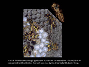 Image of wasps and the exoskeleton of a wasp species that was scanned for identification.