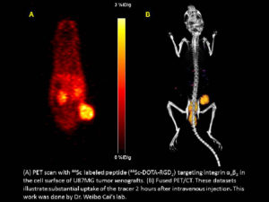 Left, PET scan of rodent with tumor visible, right, a fused PET/CT scan of the same rodent, with both skeleton and tumor visible..
